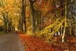Golden colors of Fall season./ Beautiful Autumn forest with country road landscape in north Poland