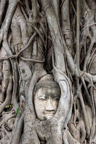 Head of Buddha embedded in tree. Ayutthaya