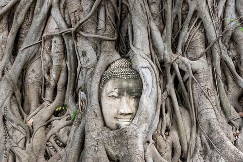 Head of Buddha embedded in tree. Ayutthaya