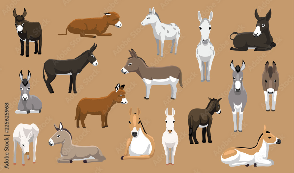 Fototapeta Various Donkey Breeds Cartoon Vector Characters