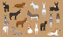 Various Donkey Breeds Cartoon Vector Characters