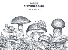 Vector Background With Hand Drawn Forest Mushrooms