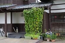 建物のグリーンカーテン