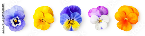 Deurstickers Pansies Pansy viola tricolor flowers set