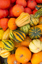 Variety Of Colorful Ornamental Gourds And Pumpkins For Halloween Holiday.