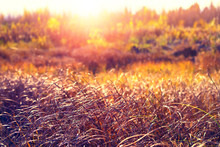 Autumn Bright Landscape. Dry Grass Later In The Fall In The Siberian Tundra.