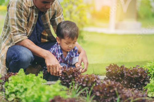 Dad teaching his son how to plant and care vegetable garden.