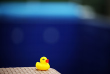 Empty Swimming Pool Toy Duck