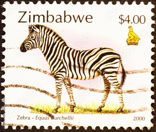 Tuinposter Zebra Zebra on postage stamp of Zimbaabwe - 1A5A9525.jpg