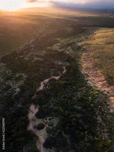 Papiers peints Cappuccino African plains