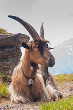 Goat On Top Of A Steep Rocky S...