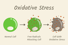 Oxidative Stress Diagram