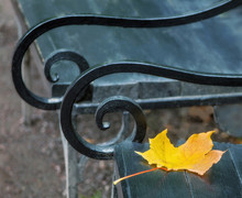 Closeup Autumn Yellow Leaf Of A Maple Lying On An Old Vintage Bench With Twisted Armrests Of Artistic Forging