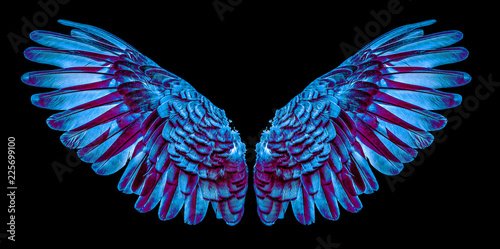 Photo  Angel wings isolated on black background