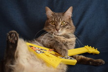 Cat Plays A Toy Guitar