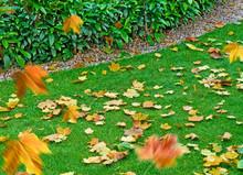 Autumn Background. Autumn Gard...