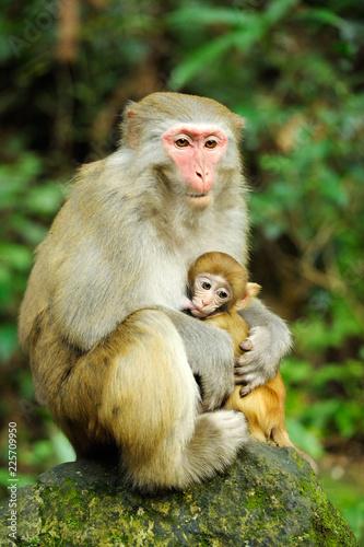 Monkey family in Zhangjiajie national park