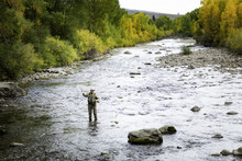Fly Fisher Man In The Rockies