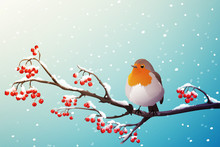 Red Robin Perched On Branch With Red Berries. Winter Season With Falling Snow. Vector Illustration Isolated On Blue Background.