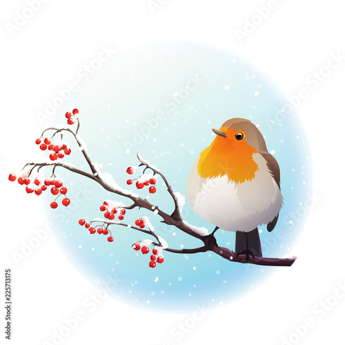 Red robin perched on branch with red berries Wallpaper Mural