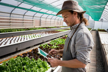 Farmer Working In Greenhouse