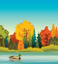 Autumn Landscape - Duck, Forest, Lake
