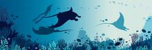 Underwater Panorama - Mantas, ...