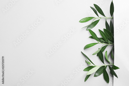 Twigs with fresh green olive leaves on light background, top view Fototapete