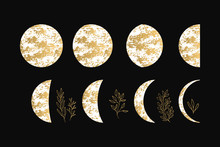 Vector Illustration Of Golden Moon And Crescent With Glitter Fancy Herbs.
