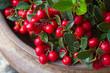 Rote Früchte der Scheinbeere
