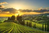Wioska Casale Marittimo, winnice i krajobraz w Maremma. Toskania, Włochy.