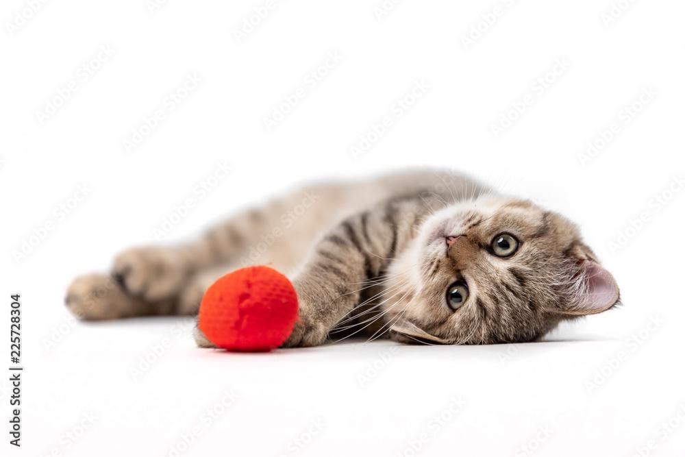 Fototapety, obrazy: Playing Kitten 1