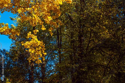 Foto op Canvas Herfst trees in autumn