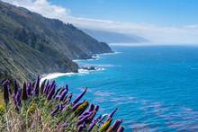 Purple Flowers By Ocean