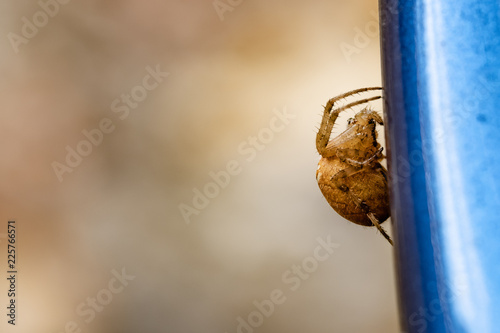 Large yellow spider in the fall macro
