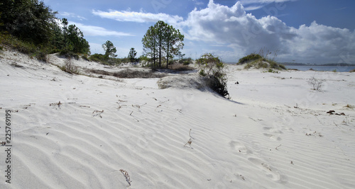 The dunes on Amelia Island Florida, Fernandina Beach is occupied by wild birds, Wallpaper Mural