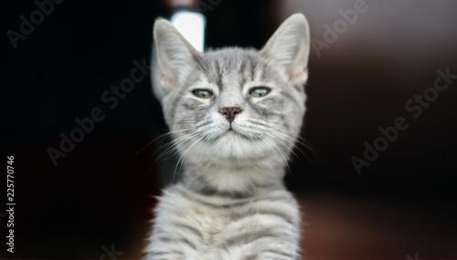 Fototapeta cat on black background obraz na płótnie
