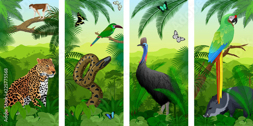 Fototapeta Vector Jungle rainforest vertical baner with parrot green Military Macaw, wild p