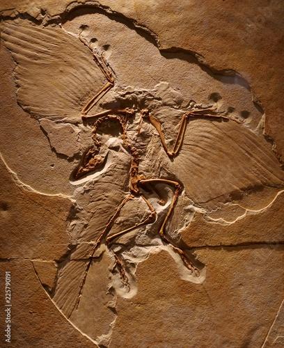 Plakat Szkieletowy egzemplarz Archeoptery