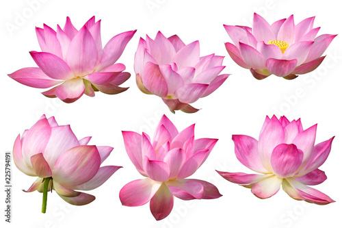 Staande foto Lotusbloem Pink Lotus flower Isolated On White Background.