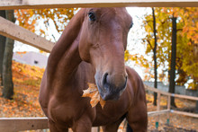 Horse In Autumn Leaves