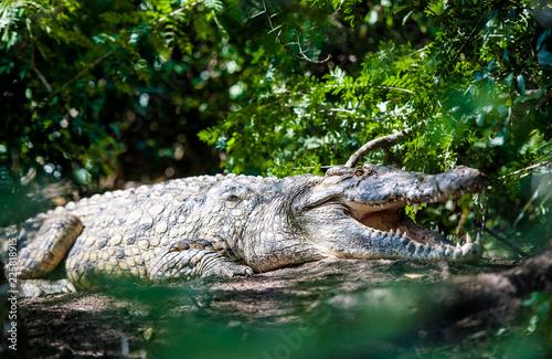 Foto op Plexiglas Krokodil Coccodrillo al Murchison Falls National Park, Uganda, Africa