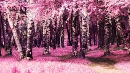 FototapetaPink birch trees in the park