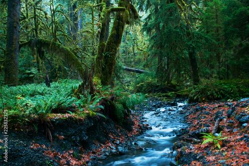 Fotografija  Rainforest nature