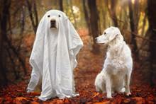 Hund Sitzt Als Gespenst Verkle...