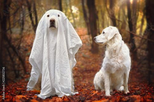 Photo Hund sitzt als Gespenst verkleidet neben anderem Hund