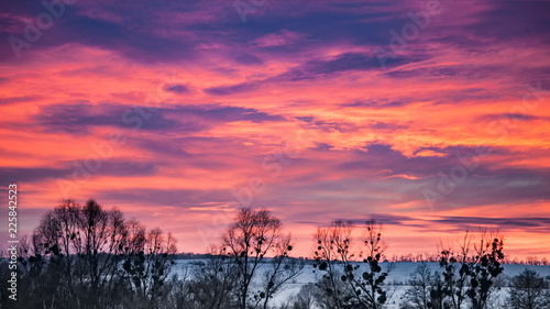 Foto op Aluminium Snoeien Trees silhouette with colorful sunset sky