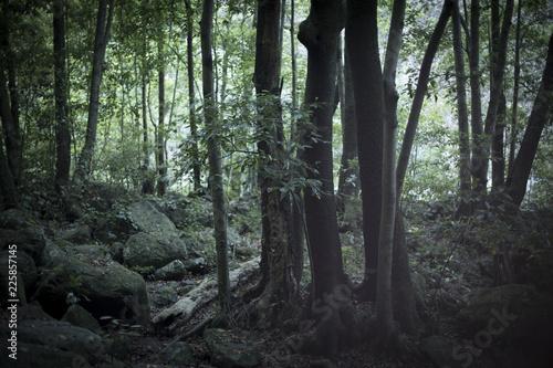 Fotografía  dark forest