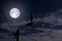 Stork At Night On A Lantern, T...