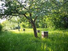 Streuobstwiese Mit Bienen
